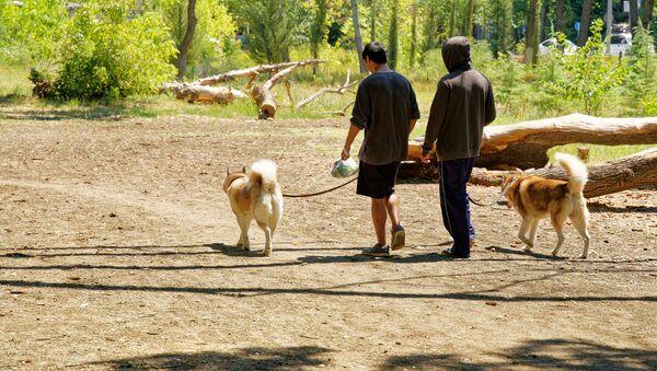ძაღლების სეირნობა - Sputnik საქართველო