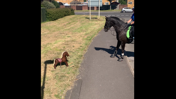 Конь увидел на улице игрушечную лошадь – его забавная реакция на видео - Sputnik Грузия