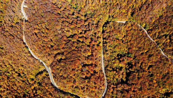 Природа и пейзажи. Волшебный лес Сабадури - живая сказка Грузии - Sputnik Грузия