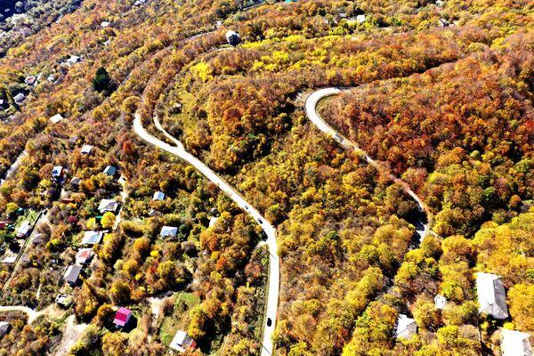 Если вы еще не были в лесу Сабадури - это стоит немедленно исправить! - Sputnik Грузия
