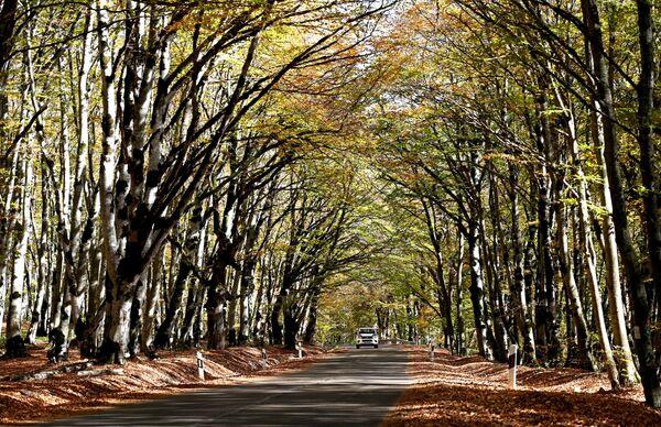Лес Сабадури входит в 20 самых красивых лесов планеты - Sputnik Грузия