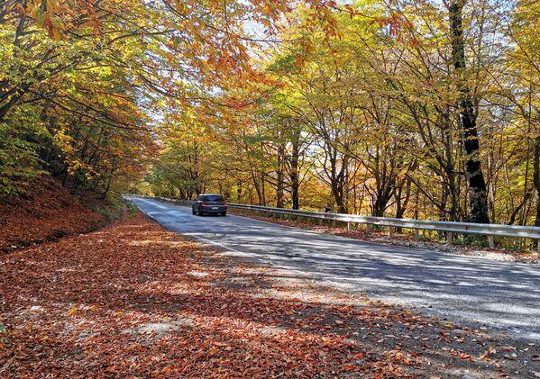 Популярность леса Сабадури не осталась незамеченной властями - теперь тут установлены информационные доски, сделаны дорожки, места для палаток и пикника - Sputnik Грузия