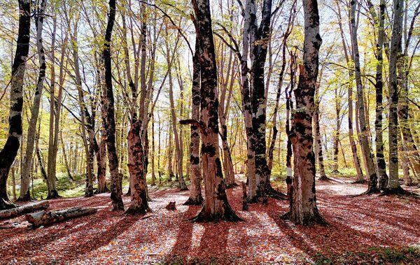 Зимой в этом лесу тоже очень красиво. Пожалуй, осень и зима - самые выгодные с точки зрения времен года моменты для посещения леса - Sputnik Грузия