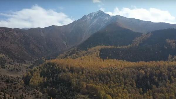 Для тех, кто устал от политики — сказочные кадры рощи под Бишкеком - Sputnik Грузия