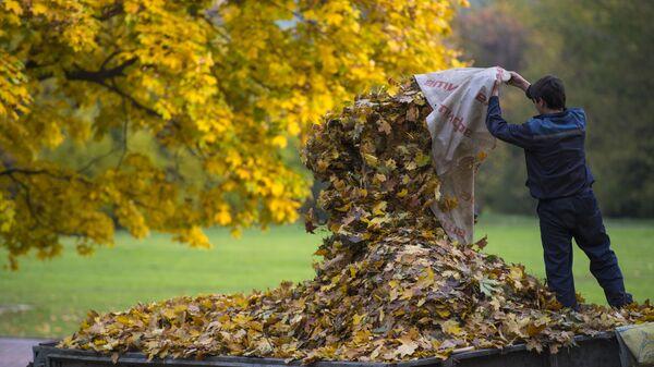 Дворник собирает опавшие с деревьев листья в парке Коломенское в Москве - Sputnik Грузия