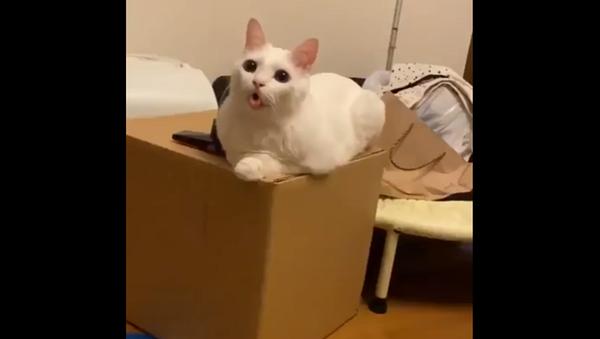 Задумалась о вкусняшках: кошка летает в облаках с бесценным выражением мордочки – видео - Sputnik Грузия