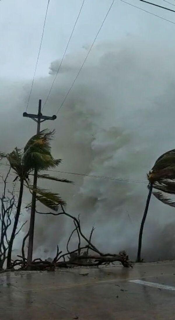 Сильный ветер повалил деревья  - Sputnik Грузия