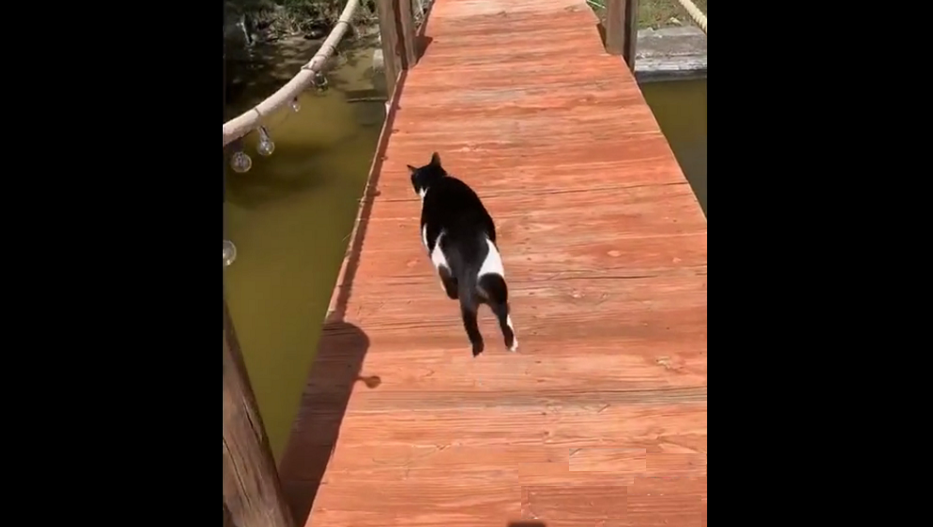Неуклюжий толстый кот переходил речку по мосту, но что-то пошло не так – смешное видео - Sputnik Грузия, 1920, 16.02.2021