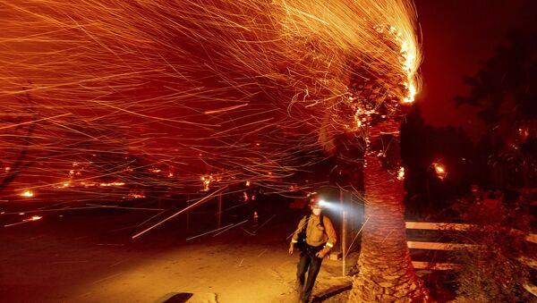 Пожарный проходит мимо горящего дерева во время тушения пожара в общине Сильверадо в Калифорнии - Sputnik Грузия