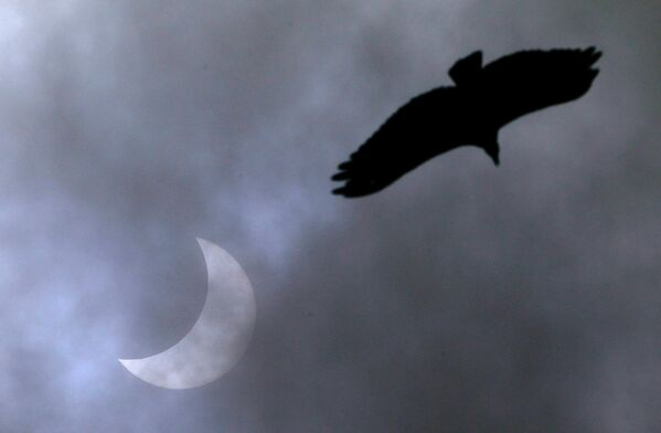 Птица в небе во время полного солнечного затмения в Бразилии - Sputnik Грузия