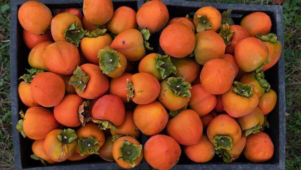 Хурма и корольки - сбор урожая - Sputnik Грузия