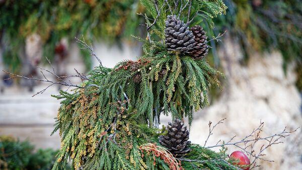Новогодние украшения. Еловые шишки на дереве - Sputnik Грузия