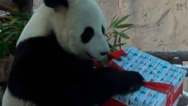 Обитатели Московского зоопарка получили новогодние подарки - видео - Sputnik Грузия