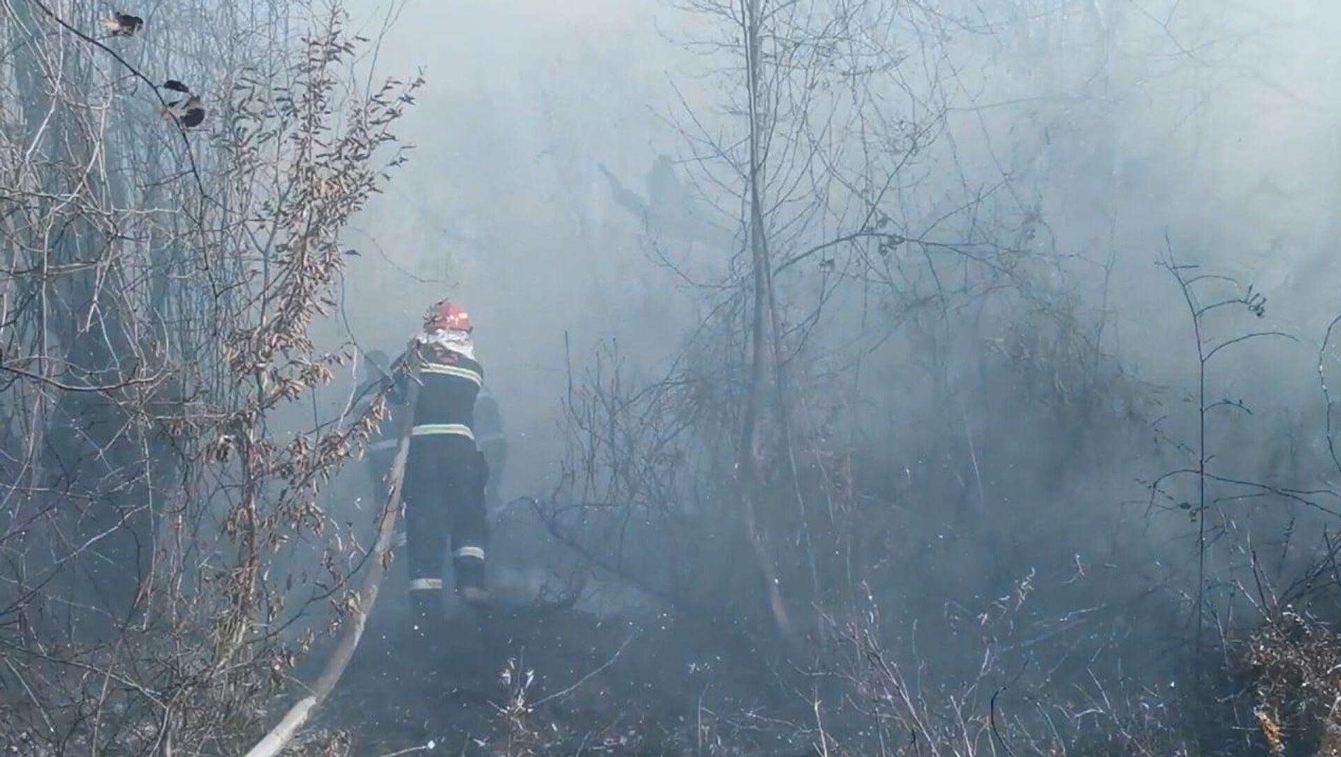 Лесные пожары в Западной Грузии в Самегрело - Sputnik Грузия, 1920, 16.05.2021