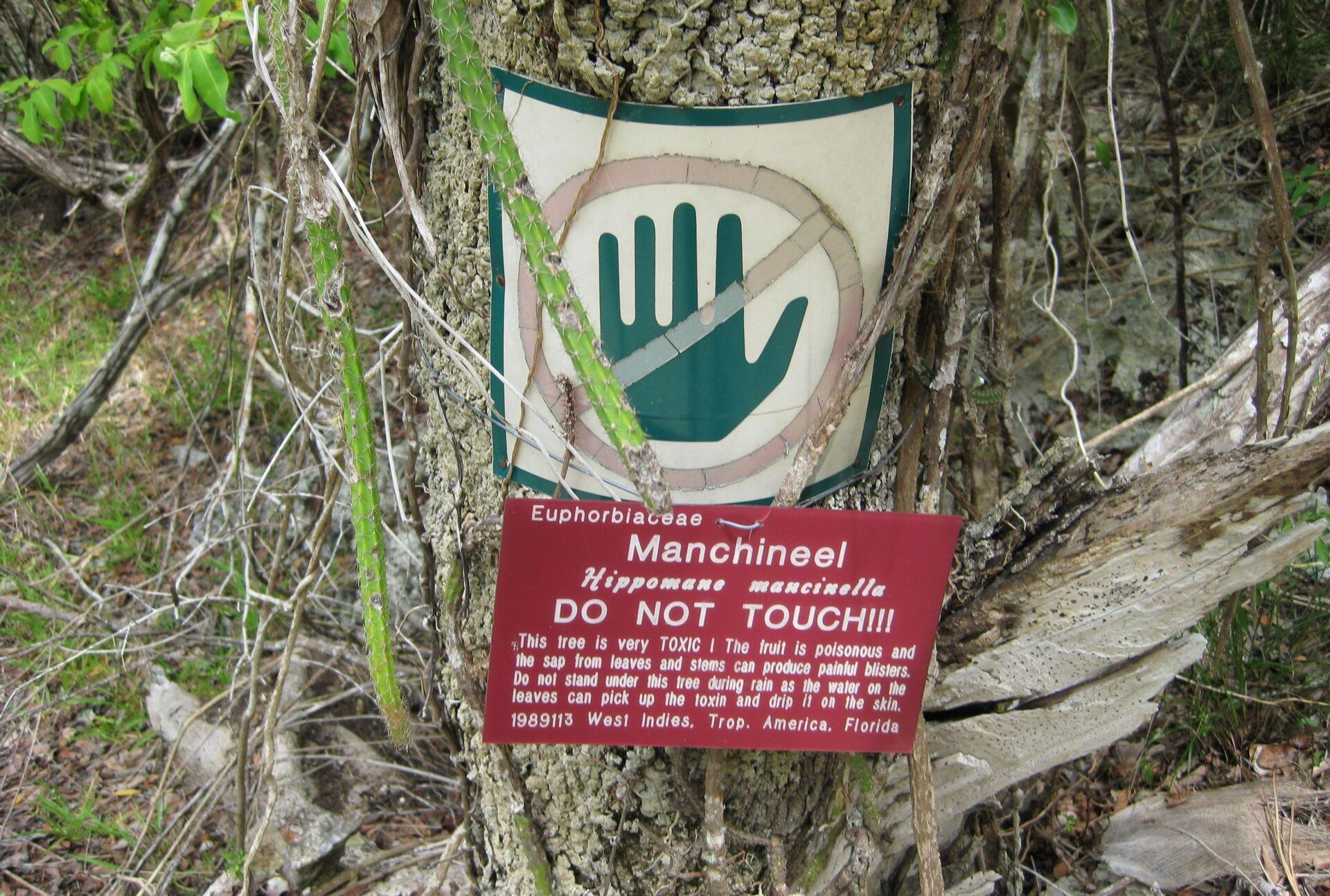 ყველაზე საშიში ხე პლანეტაზე: რატომ ვერ ანადგურებენ შხამიან მანცინელას - Sputnik საქართველო, 1920, 01.02.2021