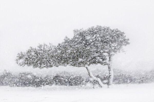 Фотография итальянца Алессандро Карбони (Alessandro Carboni) стала лучшей в категории Пейзажи и земные элементы - Sputnik Грузия