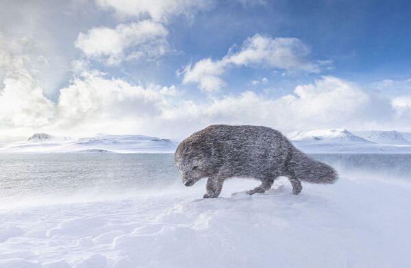 Снимок из портфолио британца Дэвида Гиббона (David Gibbon) особо отмечен жюри в категории Природа - Sputnik Грузия