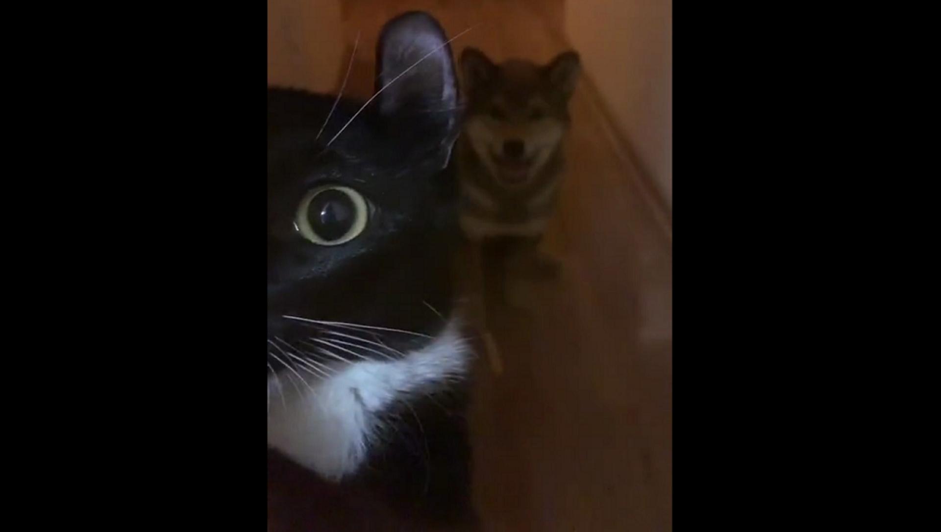 Кот и пес не могут смириться с наказанием за попытки украсть мясо с кухни – смешное видео - Sputnik Грузия, 1920, 18.02.2021
