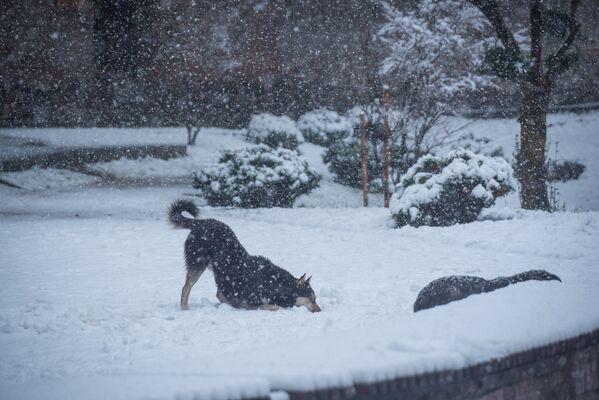 Зато собаки резвятся вовсю в снегу - Sputnik Грузия