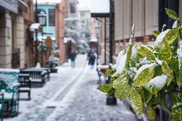 Напоминания о недолговечности снежной зимы в Тбилиси можно встретить на каждом шагу - Sputnik Грузия