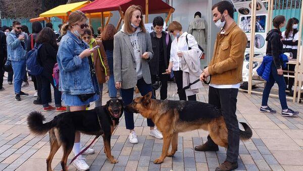თბილისში უპატრონო ცხოველების დაცვის დღე აღნიშნეს - ვიდეო - Sputnik საქართველო