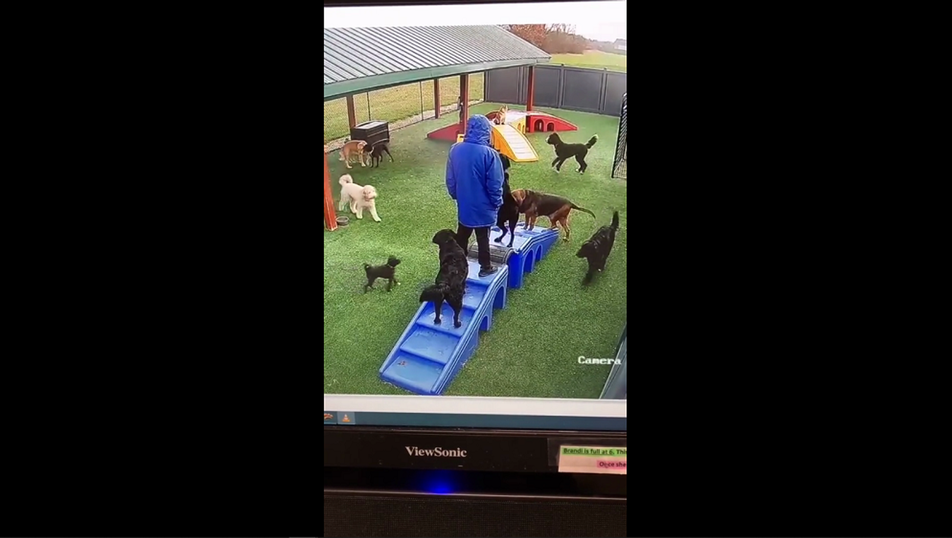 Слаженная работа: собаки сообща сбили хозяина с ног, чтобы его зацеловать – забавное видео - Sputnik Грузия, 1920, 15.06.2021