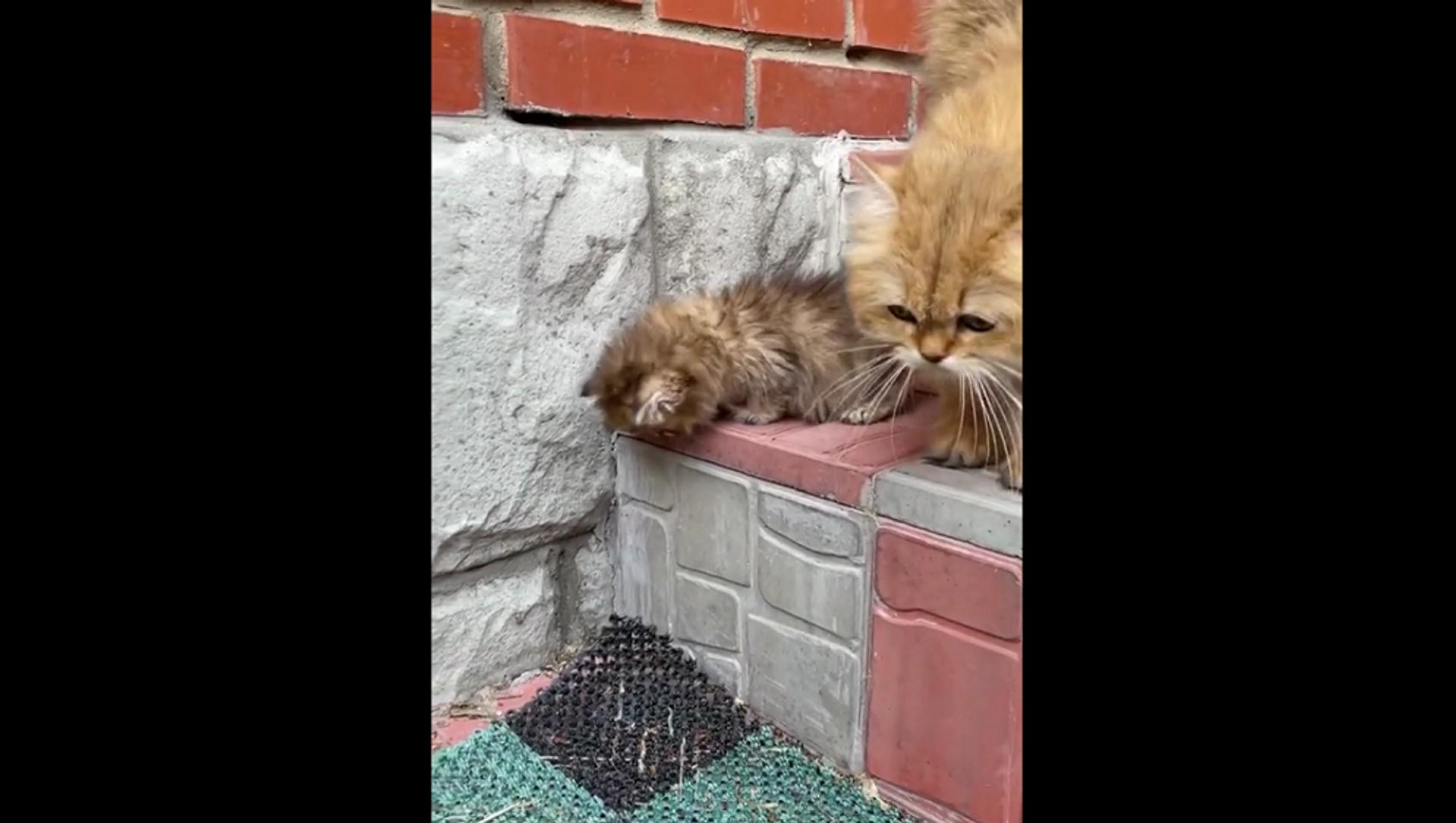Мама-кошка учит крохотного котенка спускаться с лестницы – милое видео - Sputnik Грузия, 1920, 16.06.2021