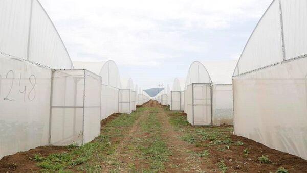 Тепличное хозяйство в Грузии - Sputnik Грузия