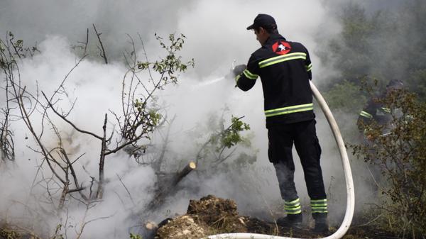 Тушение лесного пожара - Sputnik Грузия