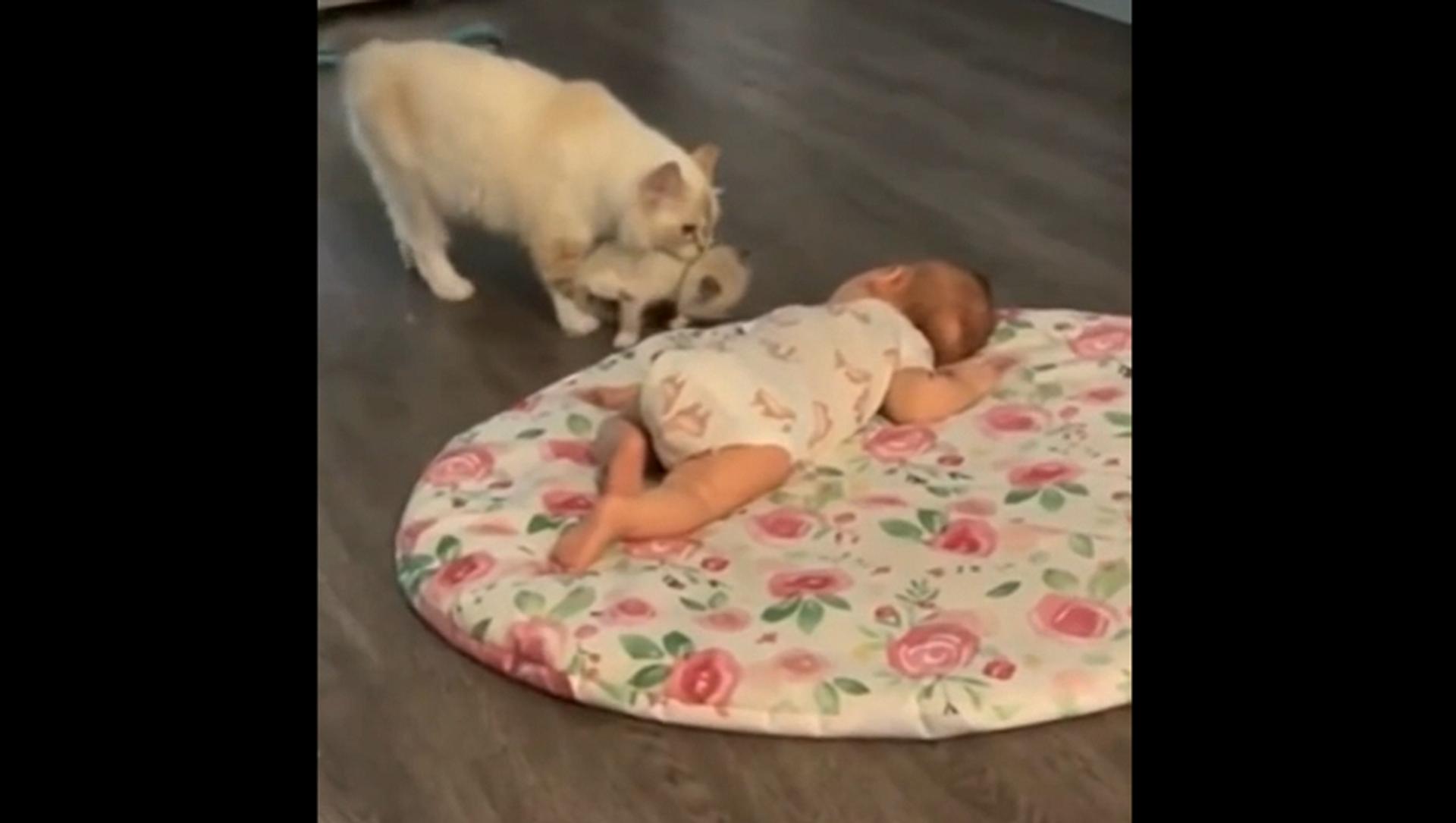 Мама-кошка приводит своего котенка подружиться с младенцем – умилительное видео - Sputnik Грузия, 1920, 13.07.2021
