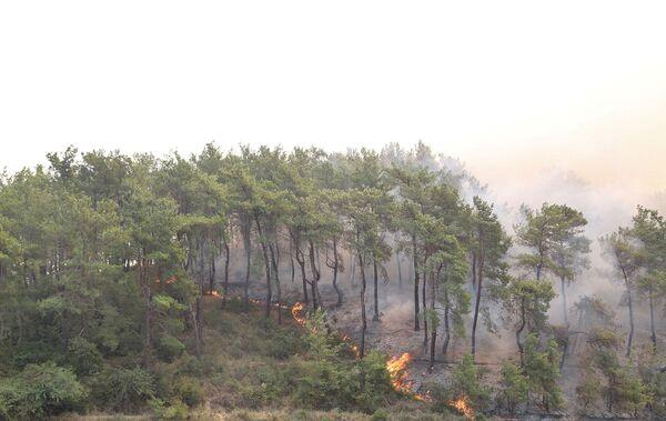 თურქეთის 12 პროვინციის ხელისუფლებამ ტყის მასივებში გადაადგილება აკრძალა აგვისტოს ბოლომდე - Sputnik საქართველო