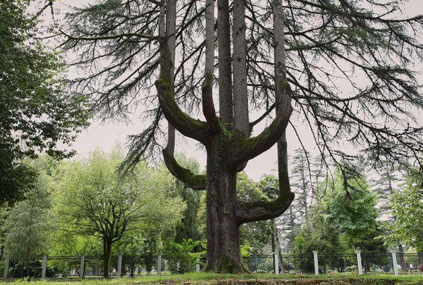 აქ იზრდება იშვიათი ჯიშის ხეები და ბუჩქები. ბაღში შეხვდებით სეკვოიებს, მაგნოლიებსა და ჭადრებს - Sputnik საქართველო