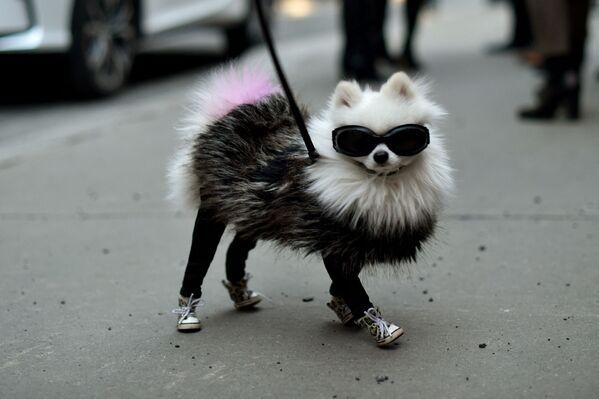 ძაღლი მოდის კვირეულზე - Sputnik საქართველო