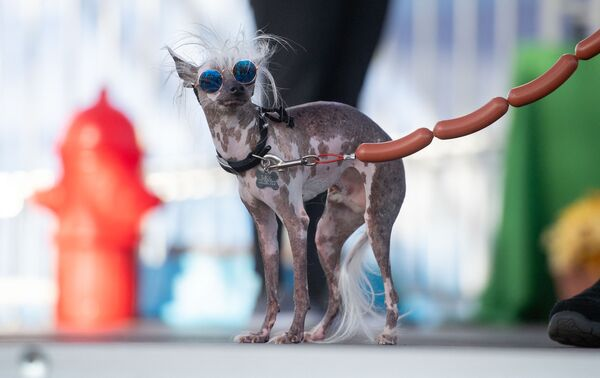 """კონკურსი """"წლის ყველაზე შეუხედავი ძაღლი"""" - Sputnik საქართველო"""