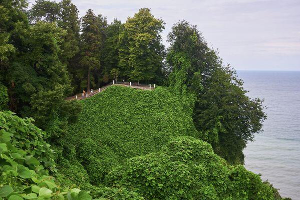 Батумский ботанический сад был основан русским  ботаником и географом Андреем Красновым в1880 году. Официальное открытие состоялось 3 ноября 1912 года. - Sputnik Грузия