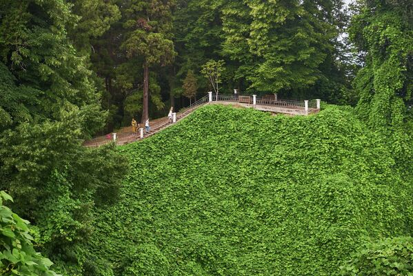 აჭარის ბოტანიკური ბაღი ბათუმიდან 9 კილომეტრში მდებარეობს - Sputnik საქართველო
