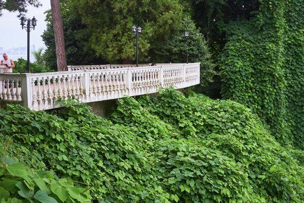 Кстати, во времена СССР Батумский ботанический сад был основным научным учреждением Союза по развитию на черноморском побережье Кавказа субтропических культур: чая, цитрусовых и других - Sputnik Грузия