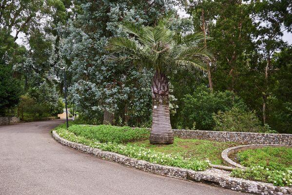 Сад состоит из девяти флористических отделов: влажных субтропиков Кавказа, новозеландского, австралийского, гималайского, восточноазиатского, североамериканского, южноамериканского, мексиканского и средиземноморского - Sputnik Грузия
