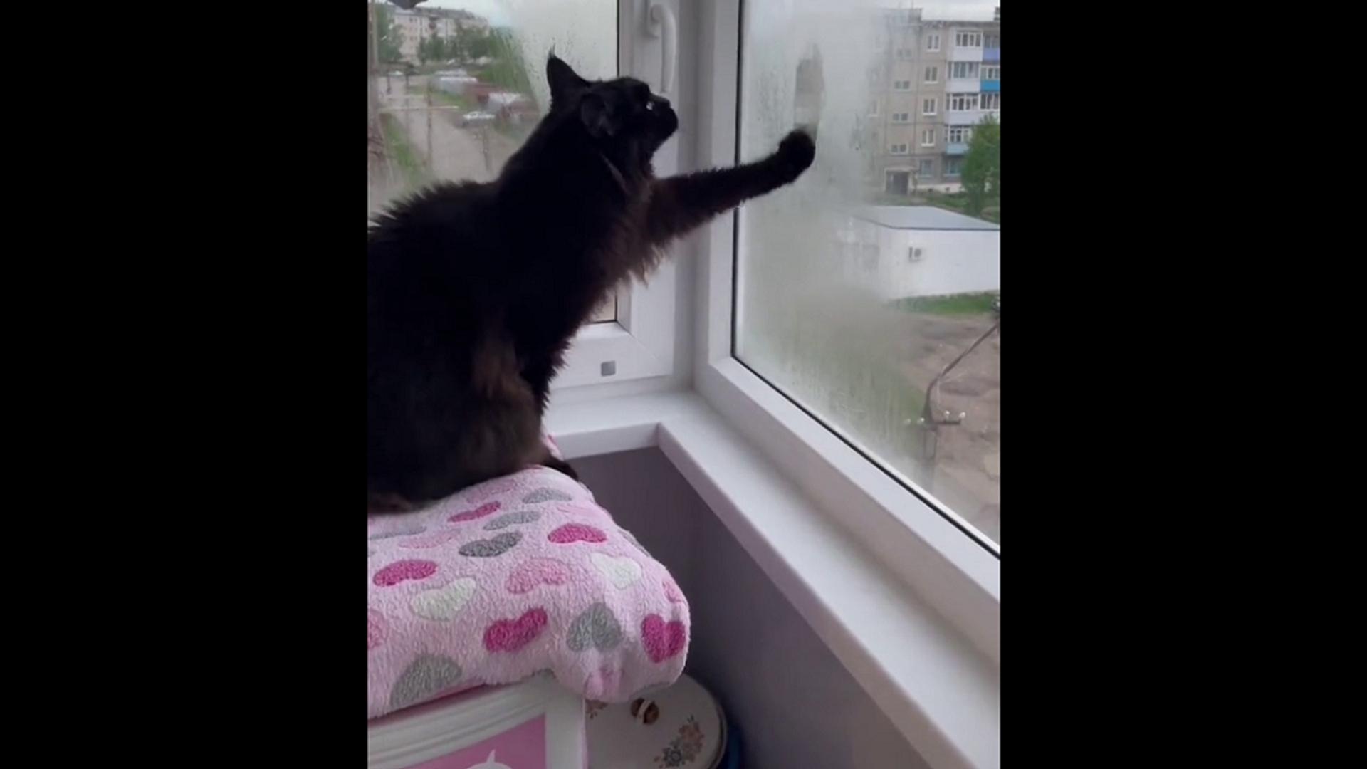 Кот нарисовал лапой сердечко на запотевшем стекле перед хозяйкой – необычное видео - Sputnik Грузия, 1920, 03.09.2021