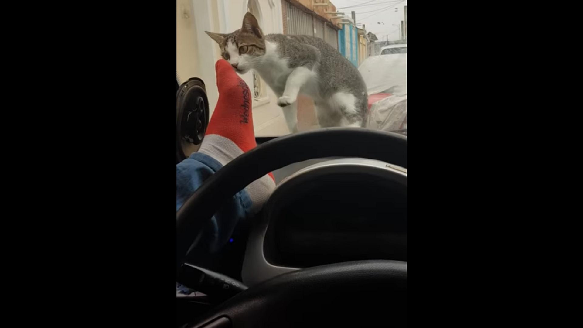 Злой водитель решил обидеть кошку, и его тут же настигла карма – видео - Sputnik Грузия, 1920, 14.09.2021