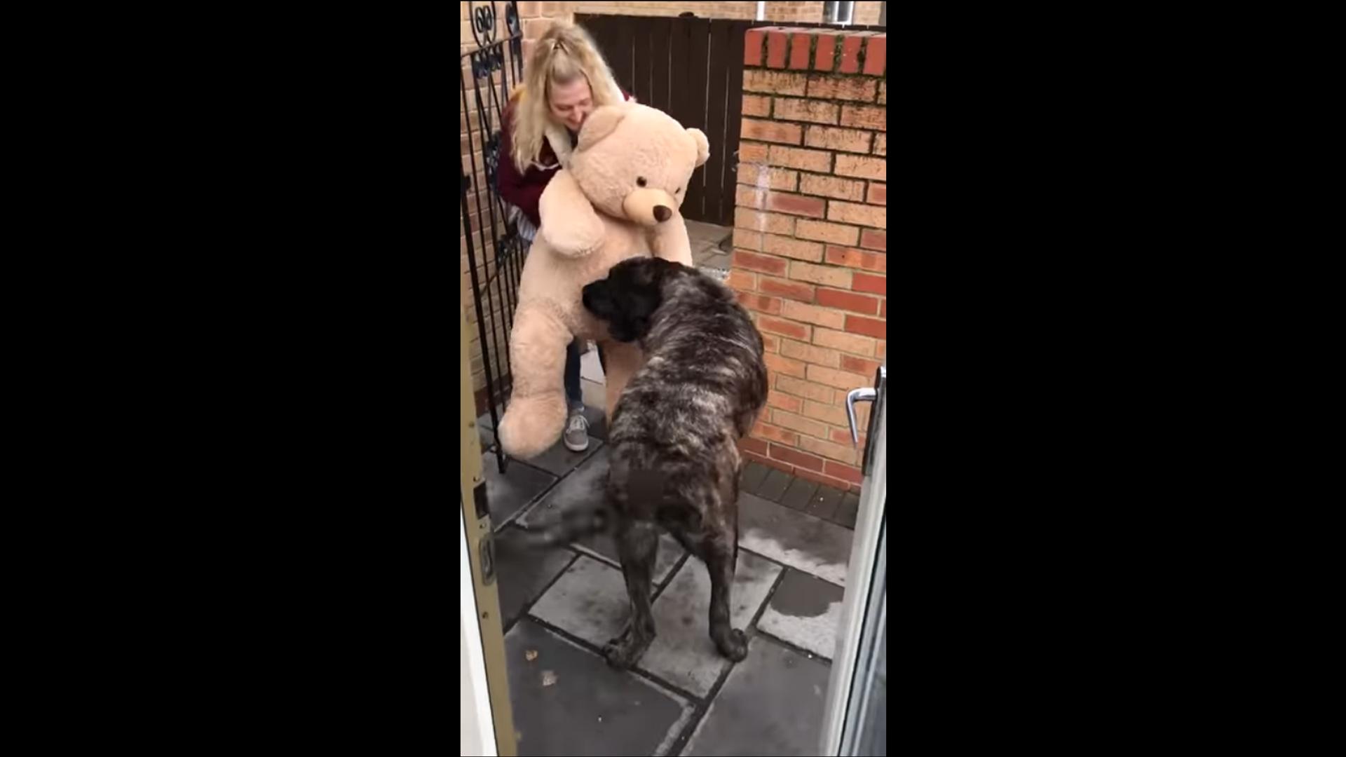 Хозяйка подарила псу огромного плюшевого мишку, и он невероятно счастлив – видео - Sputnik Грузия, 1920, 16.09.2021