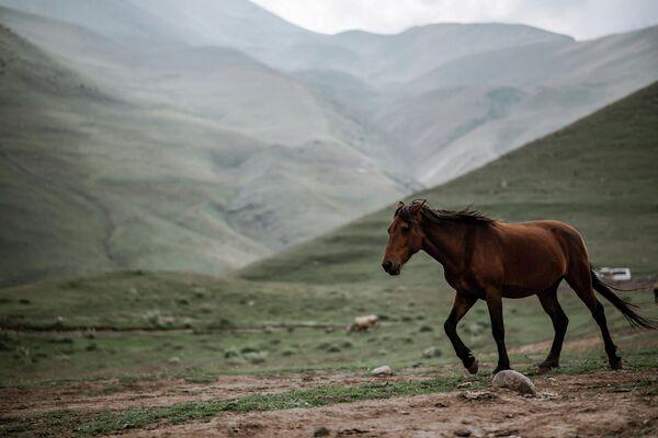 Но самое главное - это ощущение свободы и простора среди горных вершин.  - Sputnik Грузия