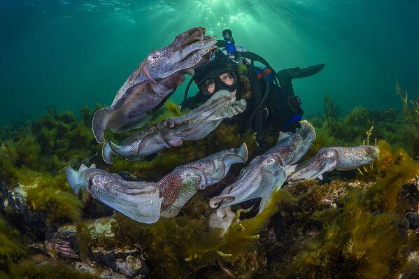 Водолаз наблюдает за спариванием каракатиц. Порт-Бонтон, Южная Австралия - Sputnik Грузия