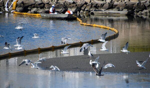 Бригады по очистке пытались ограничить распространение нефтяных пятен в проливе Талберта - Sputnik Грузия
