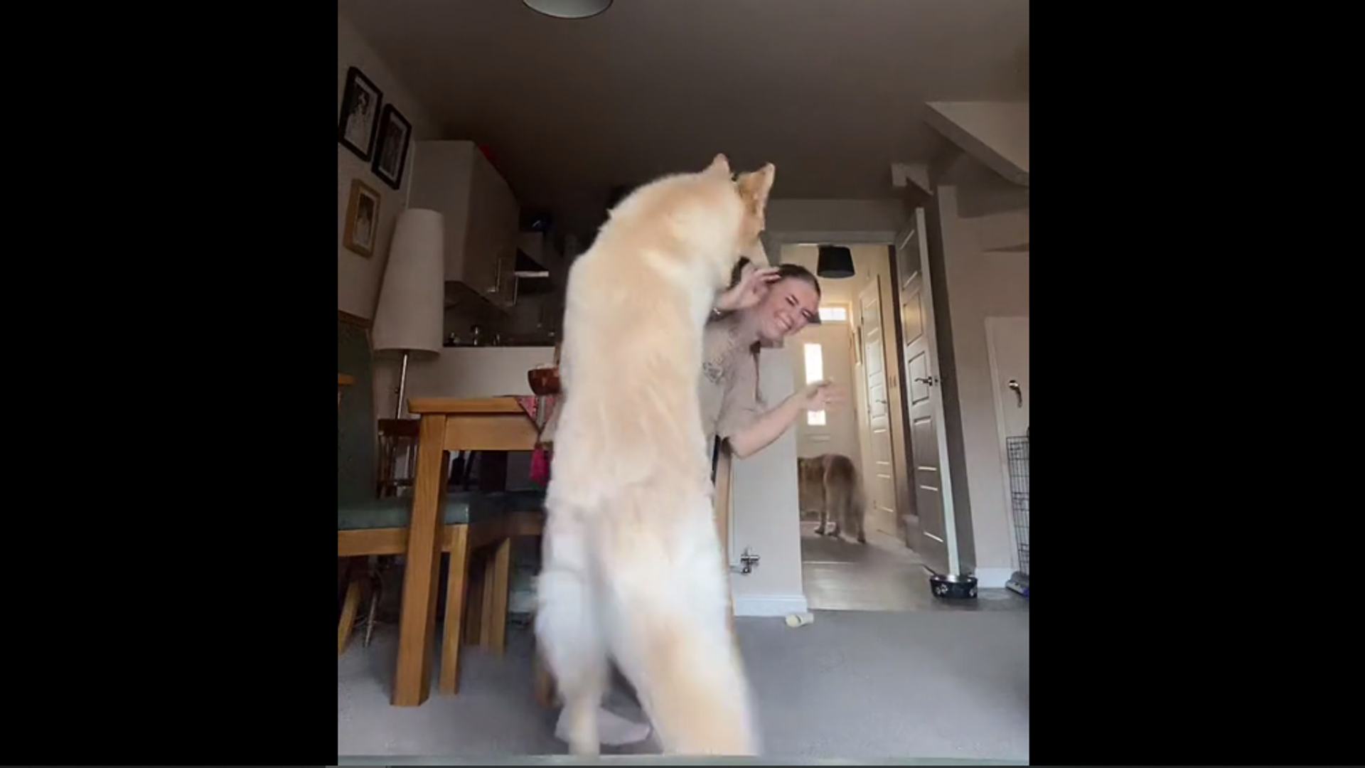 Девушка станцевала на камеру перед псом-критиком, и он выдал вердикт – смешное видео - Sputnik Грузия, 1920, 05.10.2021