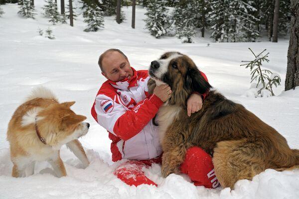 Президент России Владимир Путин с собаками Баффи и Юмэ на прогулке в Московской области - Sputnik Грузия