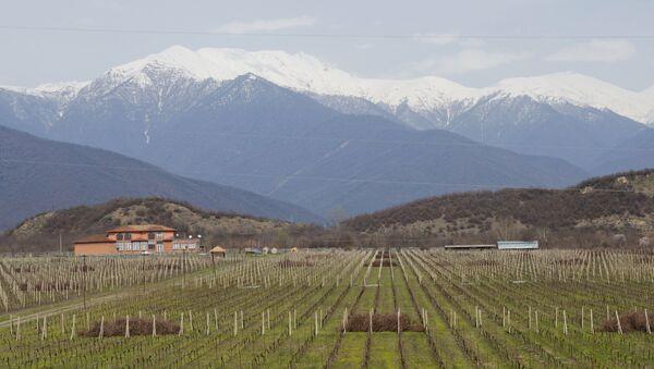 კახეთი - ქართული ღვინის სამშობლო - Sputnik საქართველო