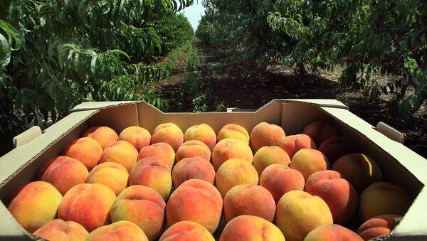 Сбор урожая персиков - Sputnik Грузия