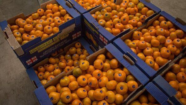 Мандарины готовые к экспорту - Sputnik Грузия