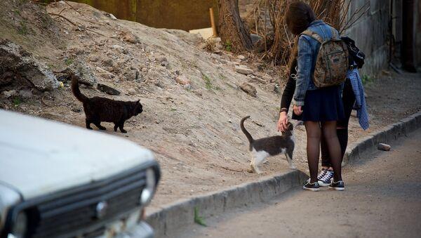 Девочки с кошками на одной из тбилисских улиц - Sputnik Грузия